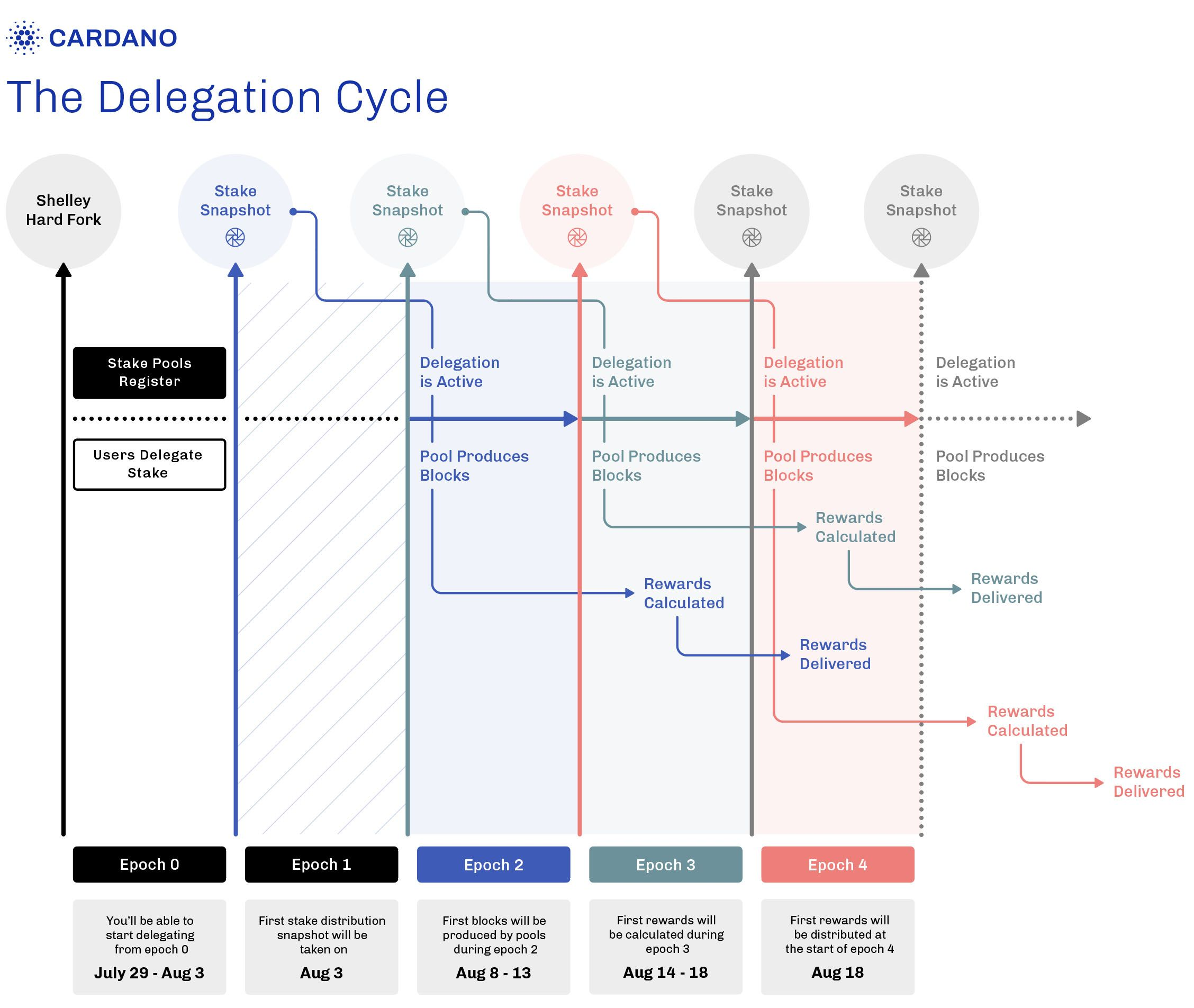 cardano-delegation-cycle.jpg